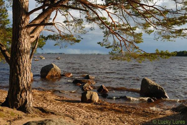 Uferbereiche mit tollem Hechtbestand sind für´s Jerken top.