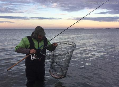 Spinnfischen in der Dämmerungsphase auf Meerforelle in Dänemrak (Fünen 2018).