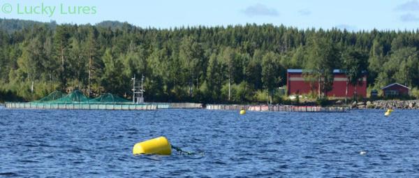 Fischzuchtanlage vom Glafsfjorden.