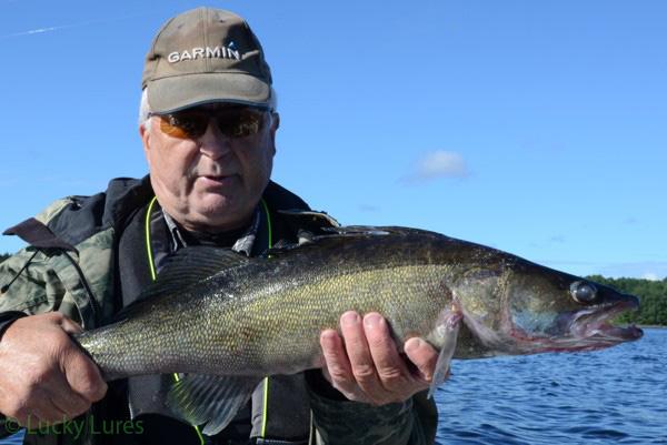 Guide Peter Wiklund mit Zander aus dem Glafsfjorden.