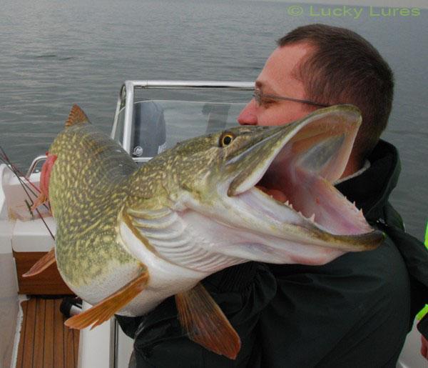 Dieser Großhecht ging Lucky Lures beim Raubfischangeln in den Niederlanden an den Haken.